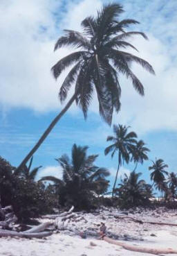 palm trees on pacific island