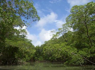 River in the Amazon rainforest