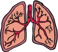mammals lungs