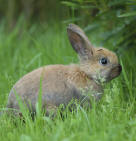rabbit example of small mammal