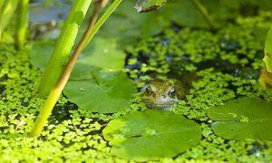 Amphibian Habitat