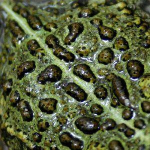 Amphibian Skin