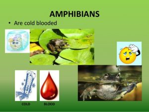 Amphibians Cold Blooded